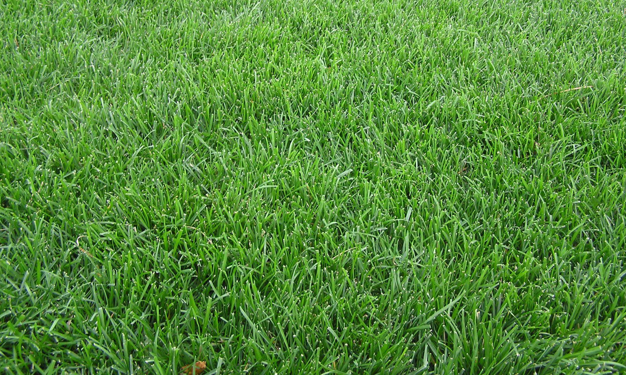 Hill's Lawn & Landscape